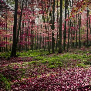 jesenny pribeh