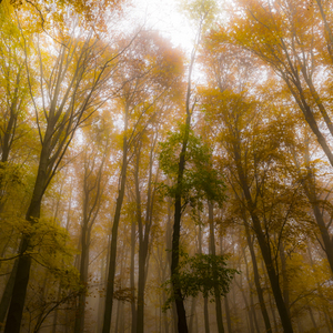 Jesen v Slanskych vrchoch