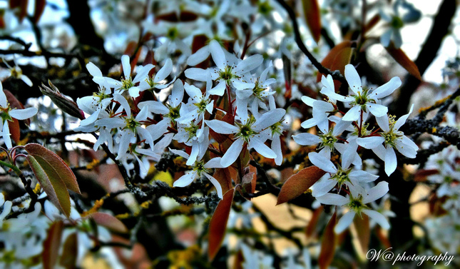 Kvitnuca jar