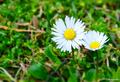 Kvitnuca jar 2
