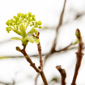 zacina sa jar