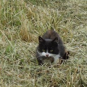 Mám ťa plné zuby/Snídaní v trávě