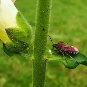 chrobáčik