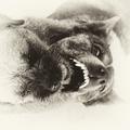Zubná prehliadka 2