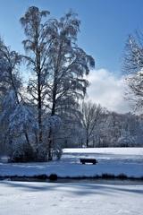 zimna z parku