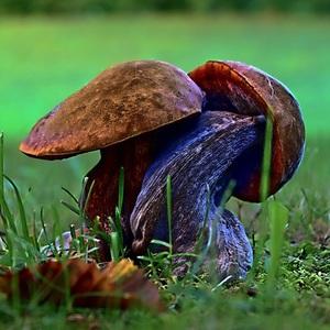 ranné tango v tráve