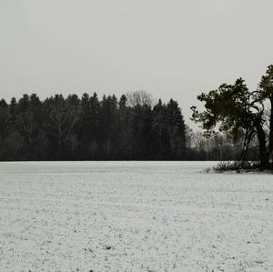 zimná stromovka