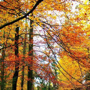 Jesenné farby udolie Lesnica 3