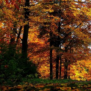 Jesenné farby udolie Lesnica 1