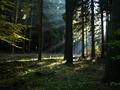 Lesní malování