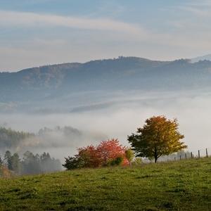 Když mlha a podzim malují