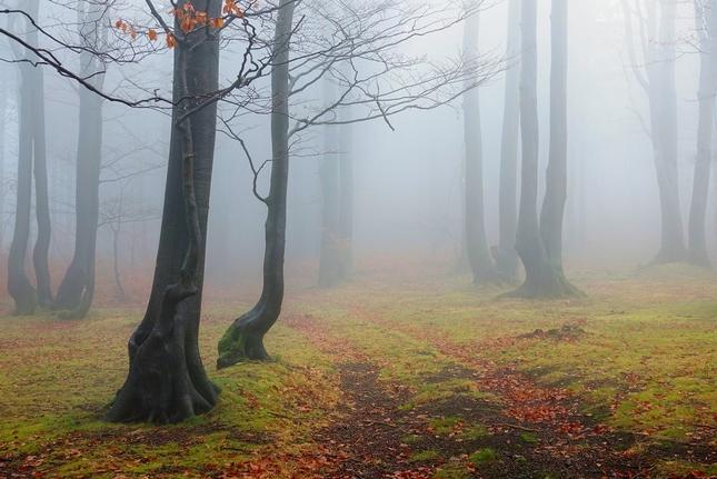 Lesním tichem