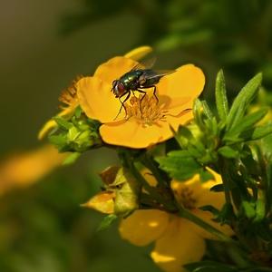 Mochna a moucha