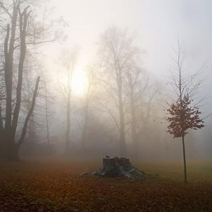 Prosincové mlhy