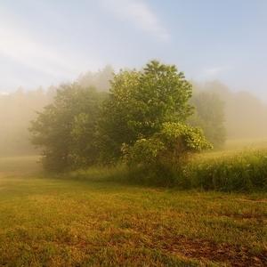 Když mlha halí