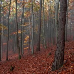 Když les hraje barvami