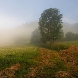 Mlhavé svítání