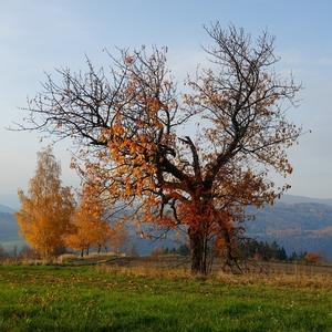 Když podzim hýří barvami