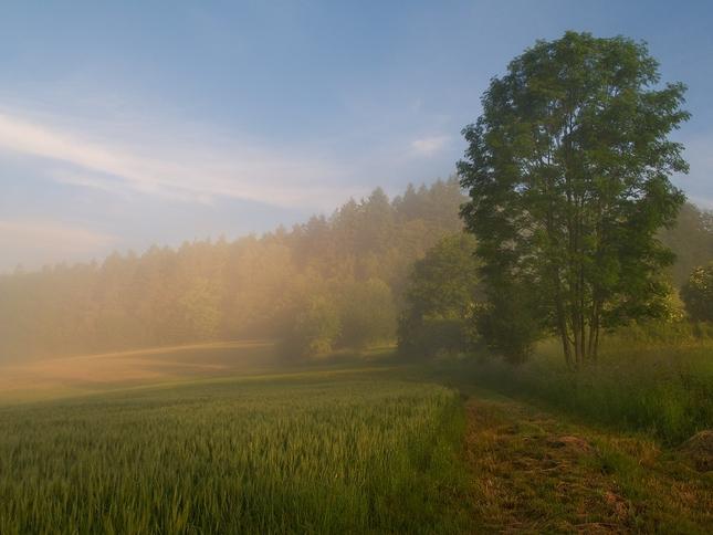 ZA mlhy