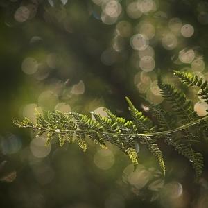 V tichu lesa