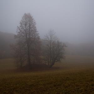 Mlha vůkol