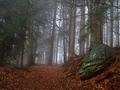 S mlhou v lese