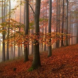 Vůně lesa