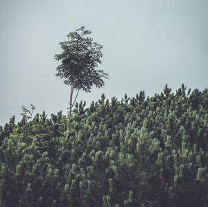 Roháče - Strom
