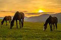 kone pri západe slnka