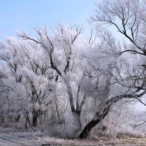 Zima v prírode