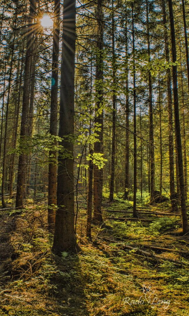 Les na Liptove