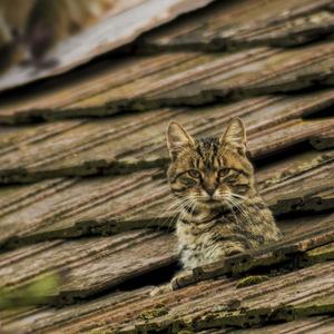 Lov na streche