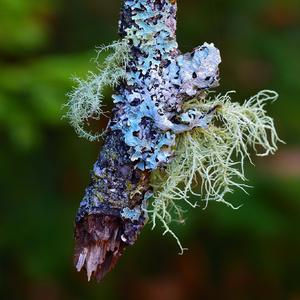 zimny kvet