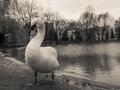 strážca labutieho jazera 2