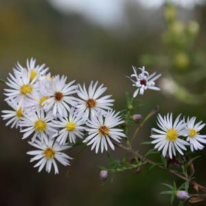 Posledné z kvetov jesene