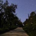 Světlušky_Fireflies