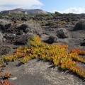 Vegetace na ostrově Vulcano