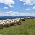 Pastýř na Ochodzité