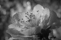 jar v čiernobielej
