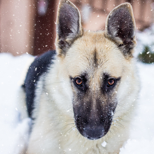 Šantenie v snehu