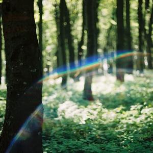 Len tak v lese