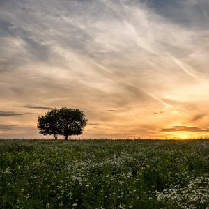 Romantika dvoch stromov
