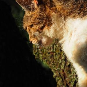 mačička malá