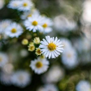 Kvetinky...