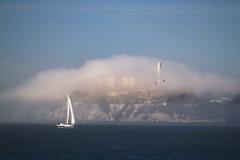 alcatraz v hmle