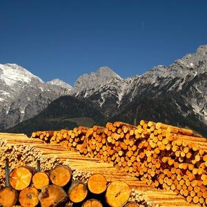 Hory dreva