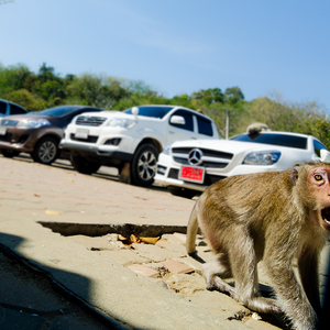Opičí kráľ
