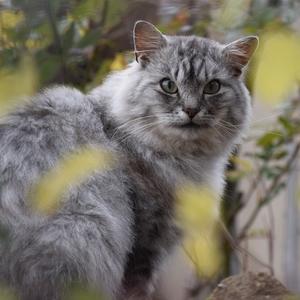 Kočka z cest