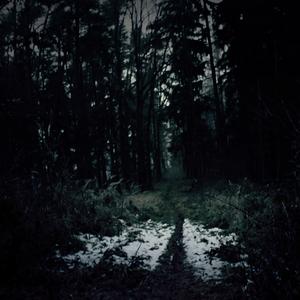 Darkness in forest