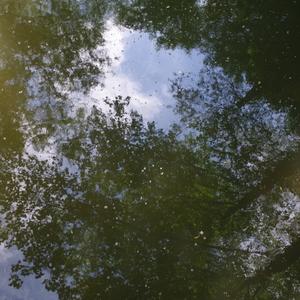 Zrkadlenie stromov